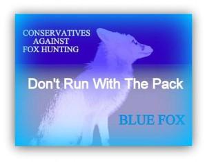 blue fox profile pic  1