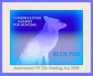 anniversary of hunting act blue fox conservatives against fox hunting