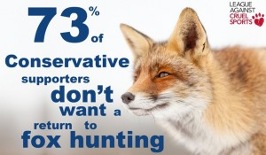 blue fox against fox hunting