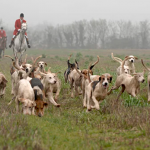 Lord Bonomy Report-Scottish foxhunting review calls for stronger legislation, The Guardian, November 2016