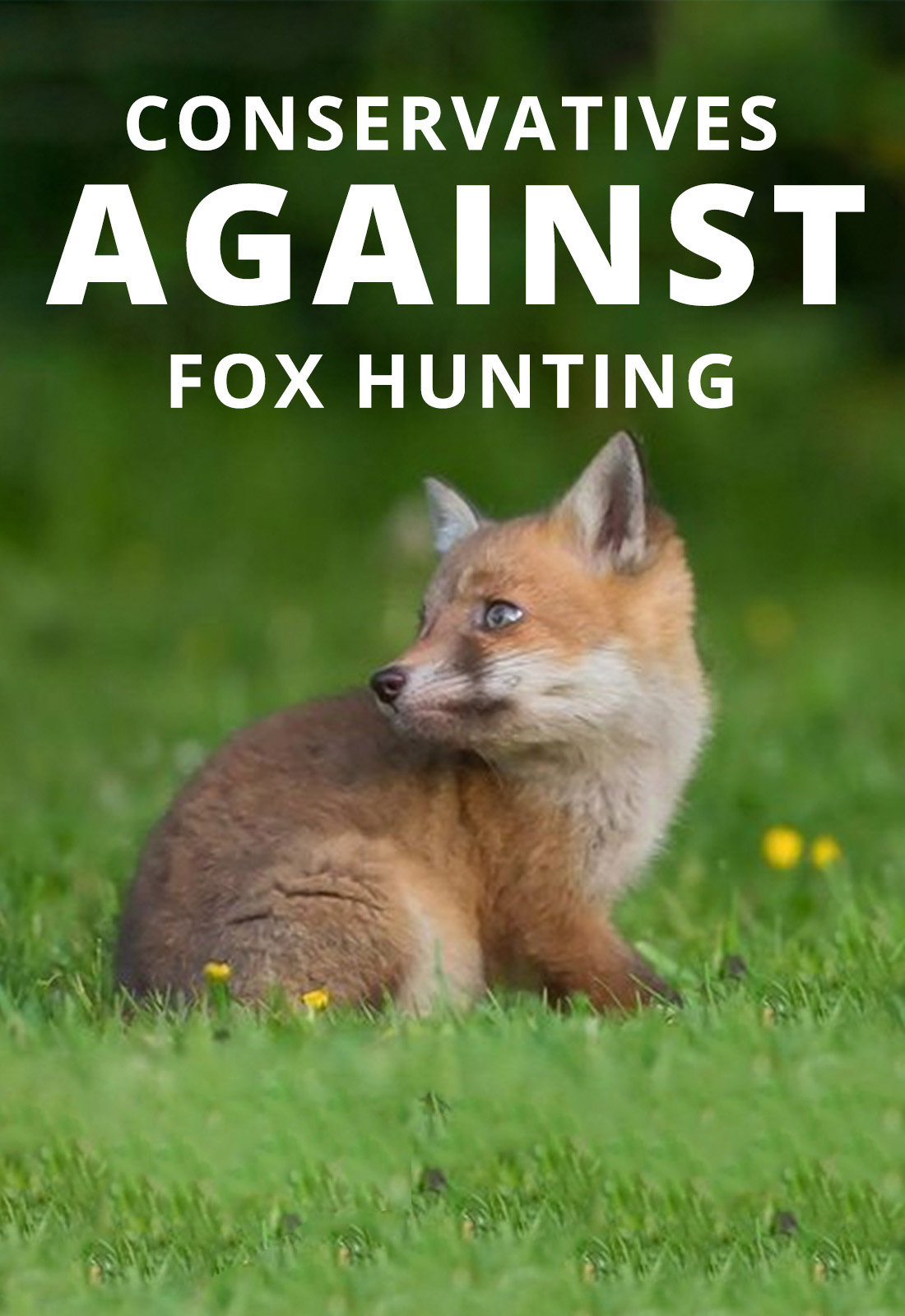 government confirms vote on repealing fox hunting ban dropped in